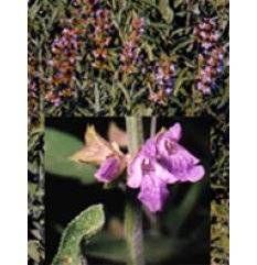 Tsa Salvia Officinalis 50ml